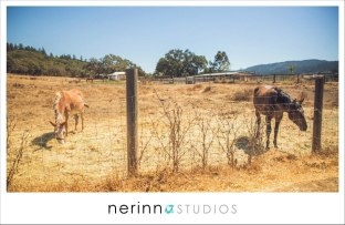 Nerinna Studios | Running Rabbit Ranch wedding | The Beauty Team